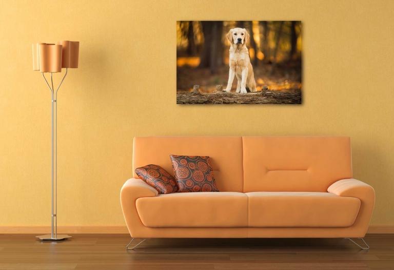 Golden retriever wall art
