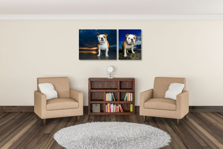 dog photos hung on wall in study