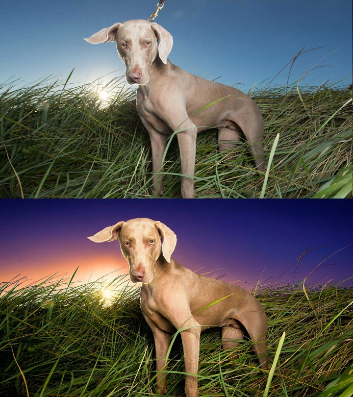 before and after edit of a Weimaraner standing on a Bridgewater beach during a custom photography session