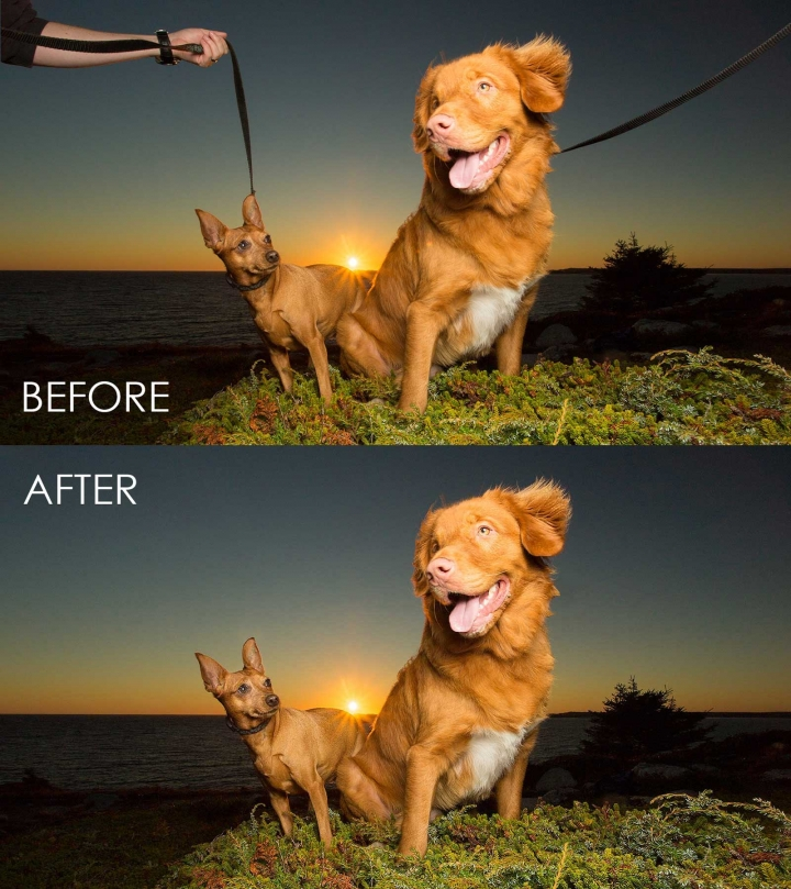 removing leashes from dog photography session